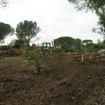 décembre 2010 - défrichement de la parcelle qui accueillera l'olivette