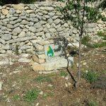 octobre 2016 - la stèle et l'amandier planté par les enfants